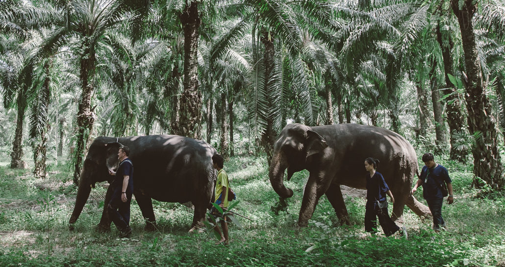 Elephants' Trekking - Krabi Elephant House Sanctuary