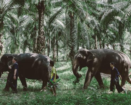 Elephants' Trekking - Krabi Elephant House Sanctuary