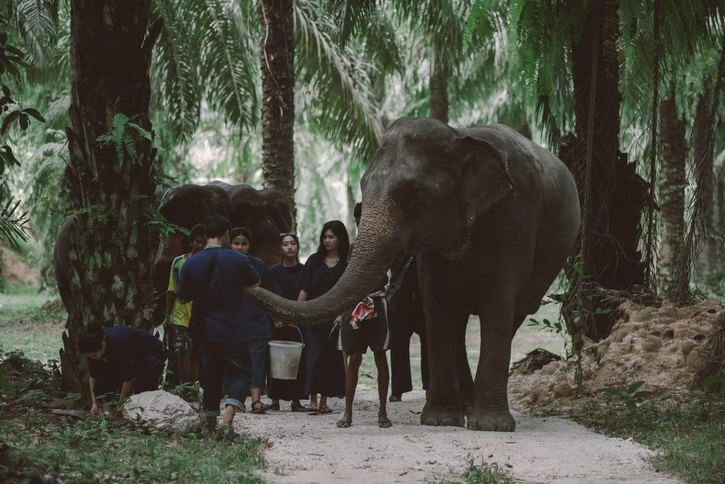 Elephant feeding, walk elephant into the jungle
