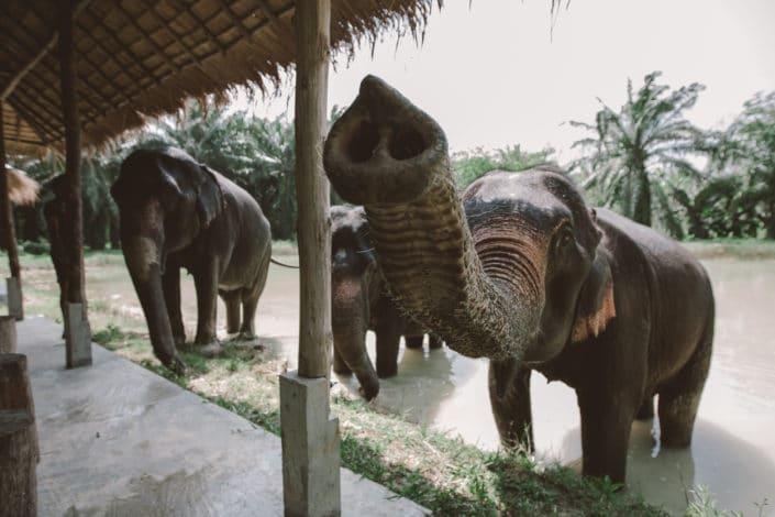 Elephant - Say Hi