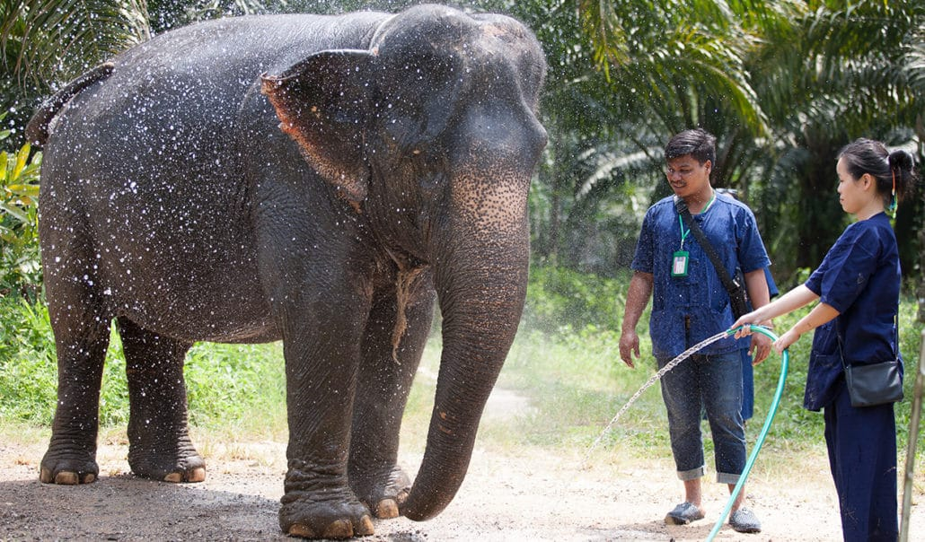 Bathing with elephant - Krabi Elephant House Sanctuary