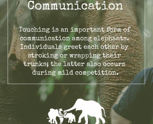 ELEPHANT'S ENCYCLOPEDIA : ELEPHANT COMMUNICATION, Krabi Elephant House Sanctuary