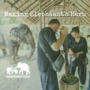 Making the Elephant's Herb - Elephant Encyclopedia