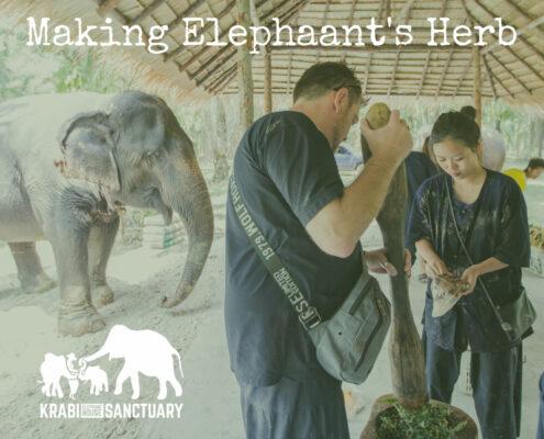 Making the Elephant's Herb - Elephant Encyclopedia