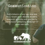 ELEPHANT'S ENCYCLOPEDIA : ELEPHANT COMMUNICATION Part 2