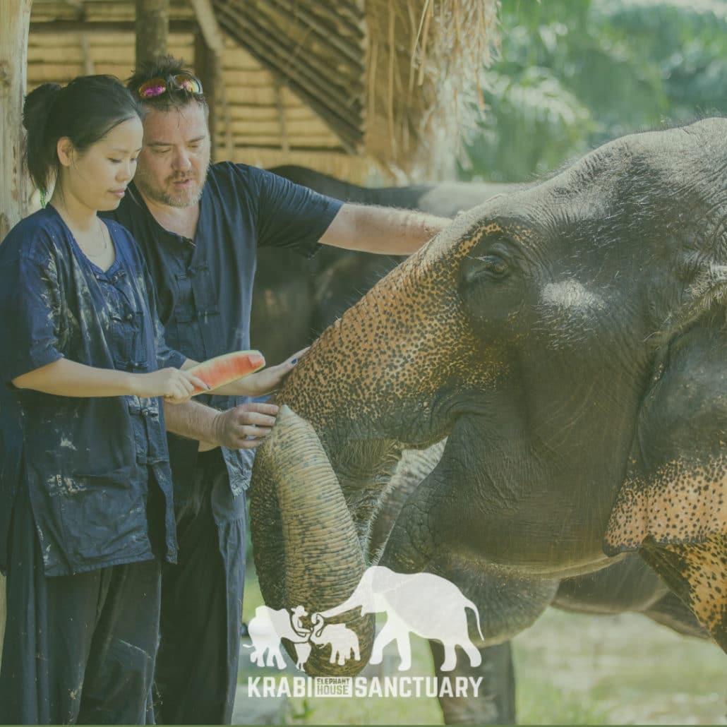 Feed Elephant_Fruit Watermelon into elephant