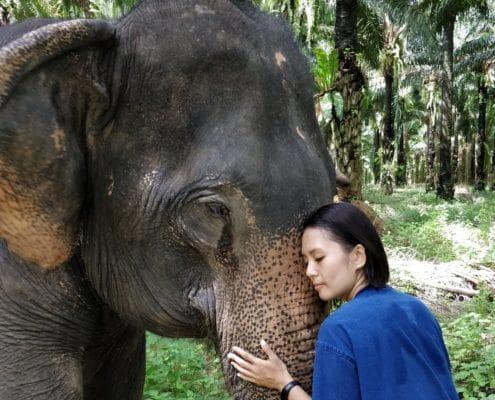 soulmate elephant