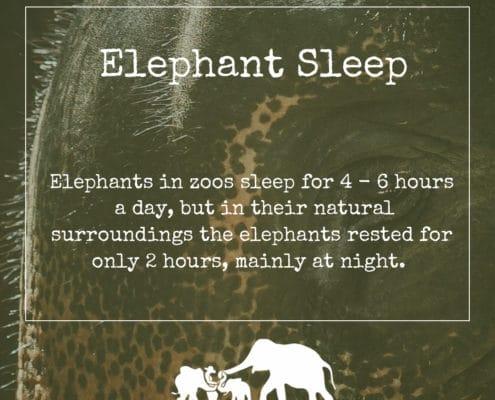 Elephant Sleeping Habits - Krabi Elephant House Sanctuary