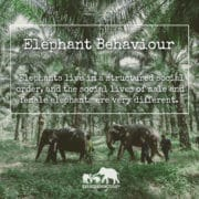 Elephant Behaviour, Krabi Elephant House Sanctuary