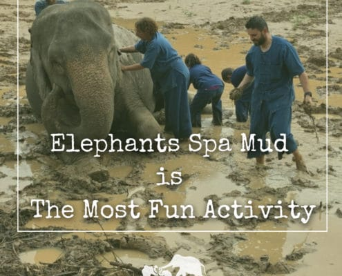 Elephants Spa Mud is The Most Fun Activity