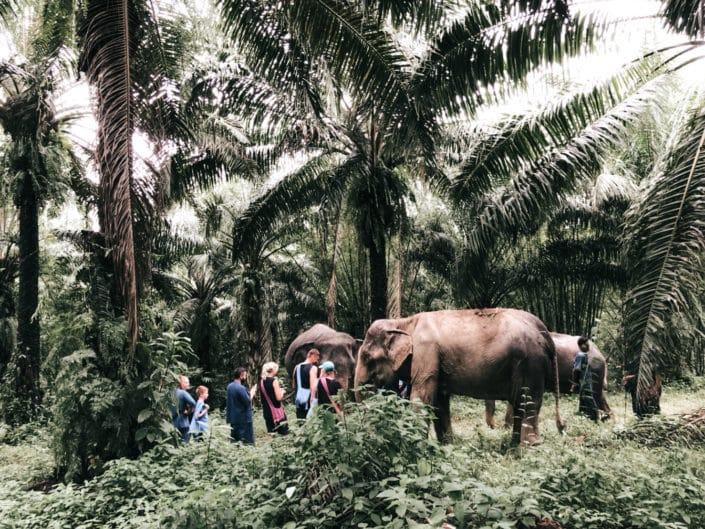 Jungle Walk with Elephant