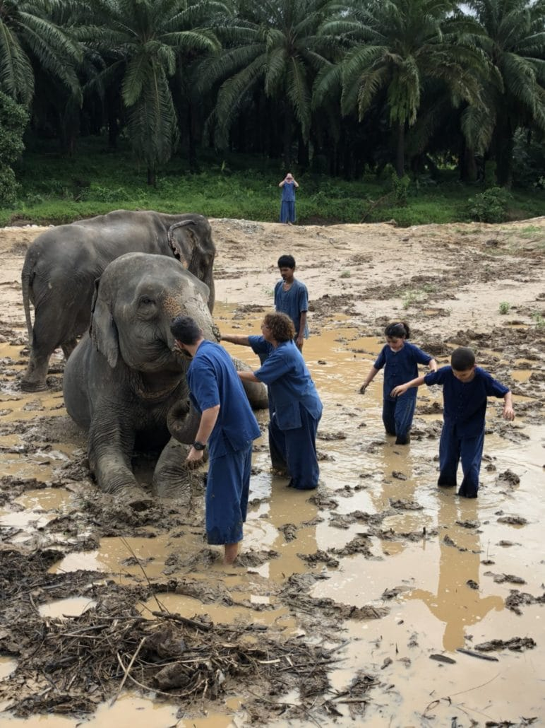 Elephants Spa Mud is The Most Fun Activity by Krabi Elephant House Sanctuary