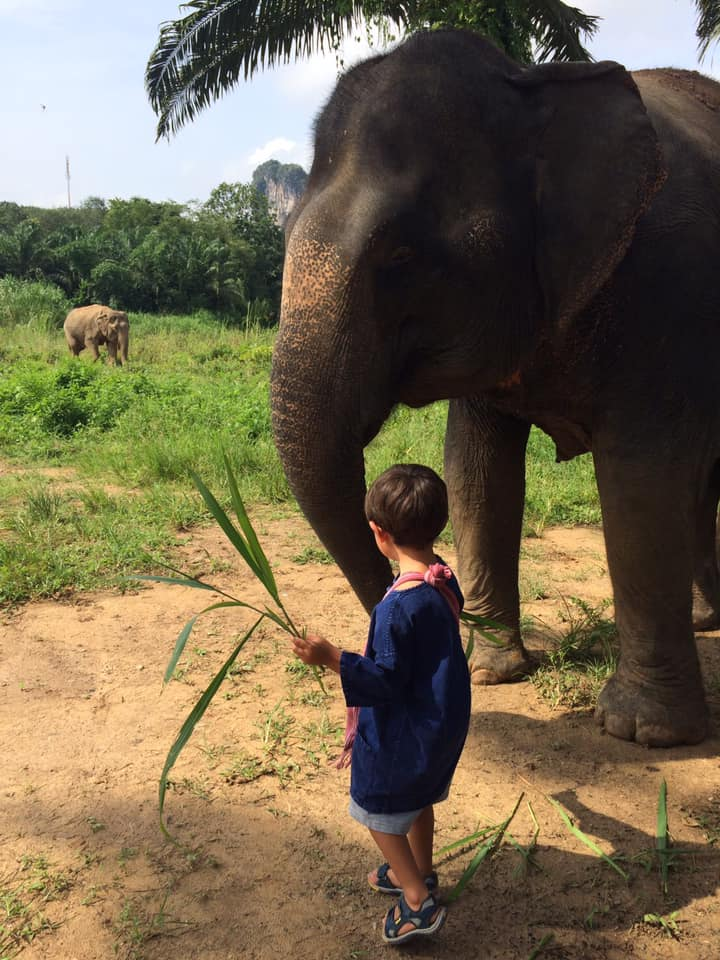 a Boy and Elephant - Things to Do in Krabi Province - Krabi Elephant House Sanctuary