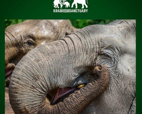 elephant health