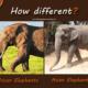 asian-elephants-vs-african-elephants