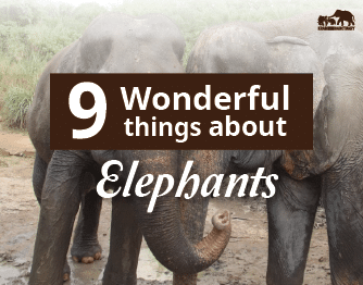 9 wonderful Elephants