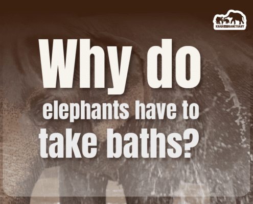 elephants have to take baths