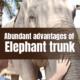 The usefulness of Elephant trunk